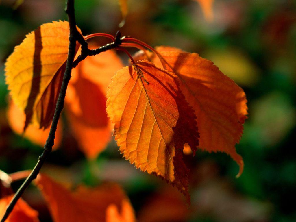 Hazan yaprakları-5