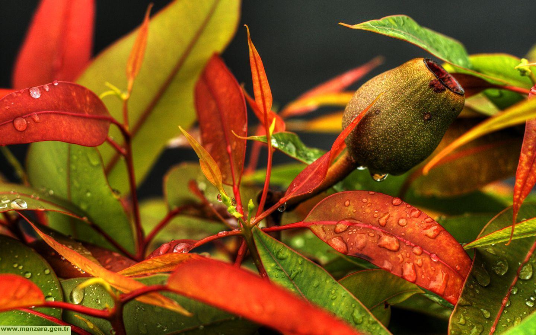 Hazan yaprakları-7