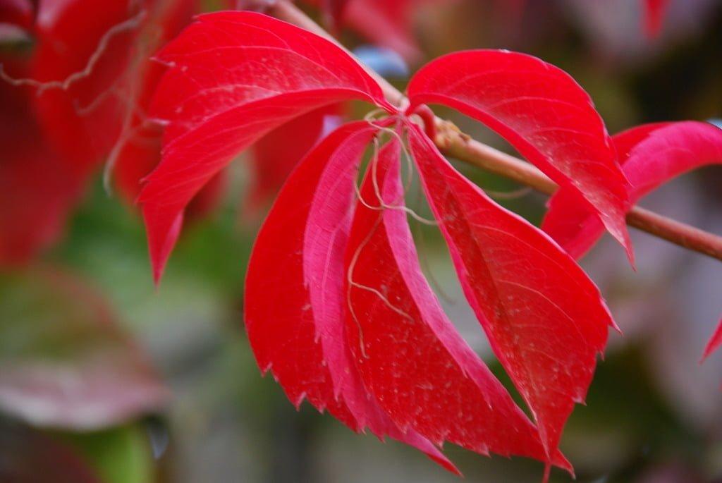Hazan yaprakları-9