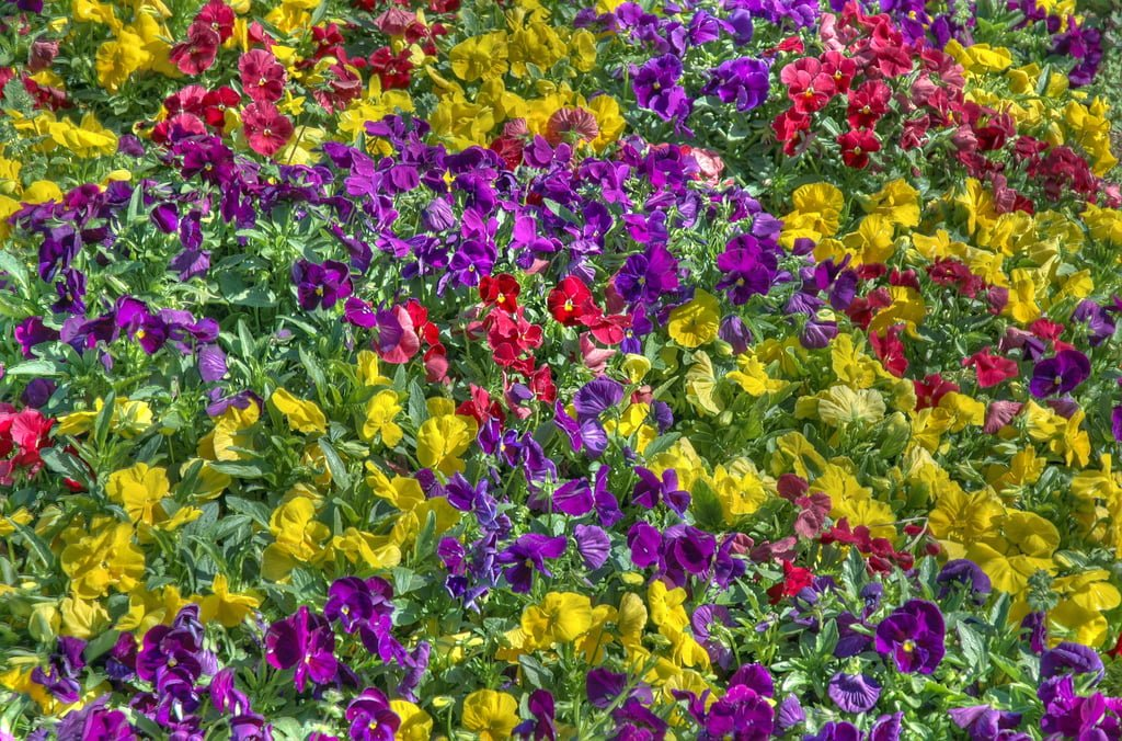 hdr çiçekler
