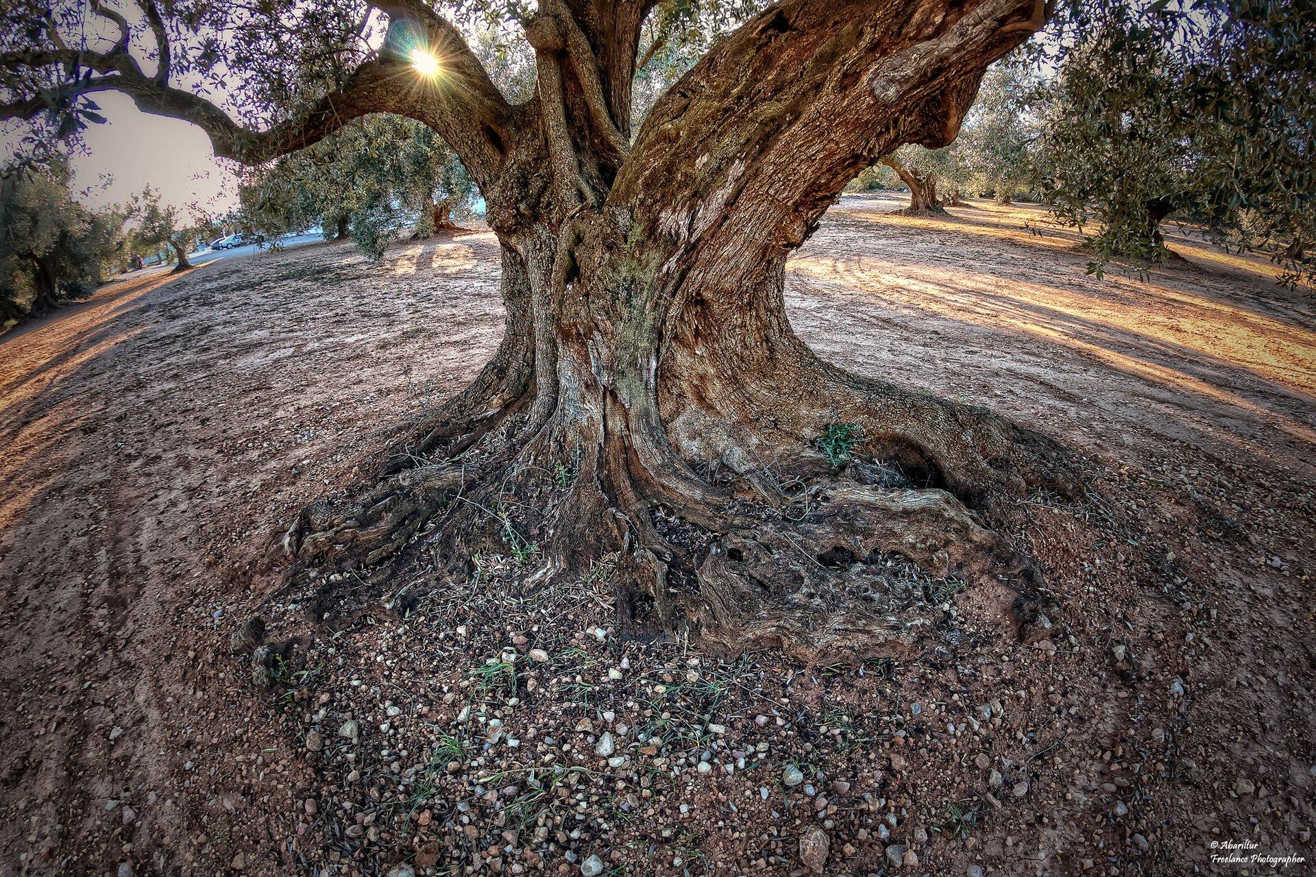 hdr ağaç