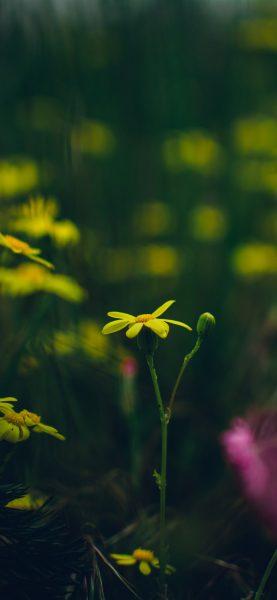iPhone 12 için Çiçek Arka Planları