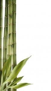 iPhone 5 Bambu Duvar Kağıdı 5