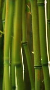 iPhone 5 Bambu Duvar Kağıdı 6