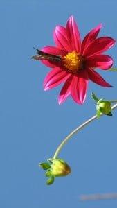 iPhone 5 Çiçek Wallpaper 1