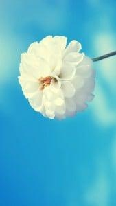 iPhone 5 Çiçek Wallpaper 2