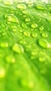 iPhone 5 Yeşil Yaprak Arkaplan 2