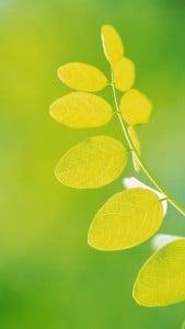 iPhone 5 Yeşil Yaprak Arkaplan 3