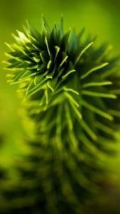 iPhone 5 Yeşil Yaprak Arkaplan 4