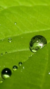 iPhone 5 Yeşil Yaprak Arkaplan 6