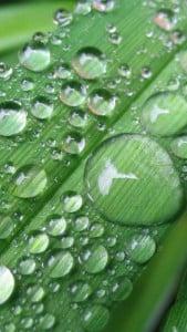 iPhone 5 Yeşil Yaprak Arkaplan 7
