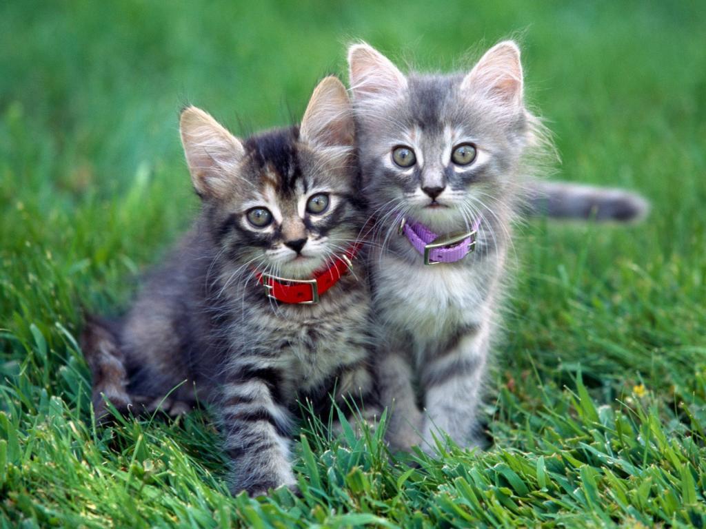 iki yavru kedinin öyküsü