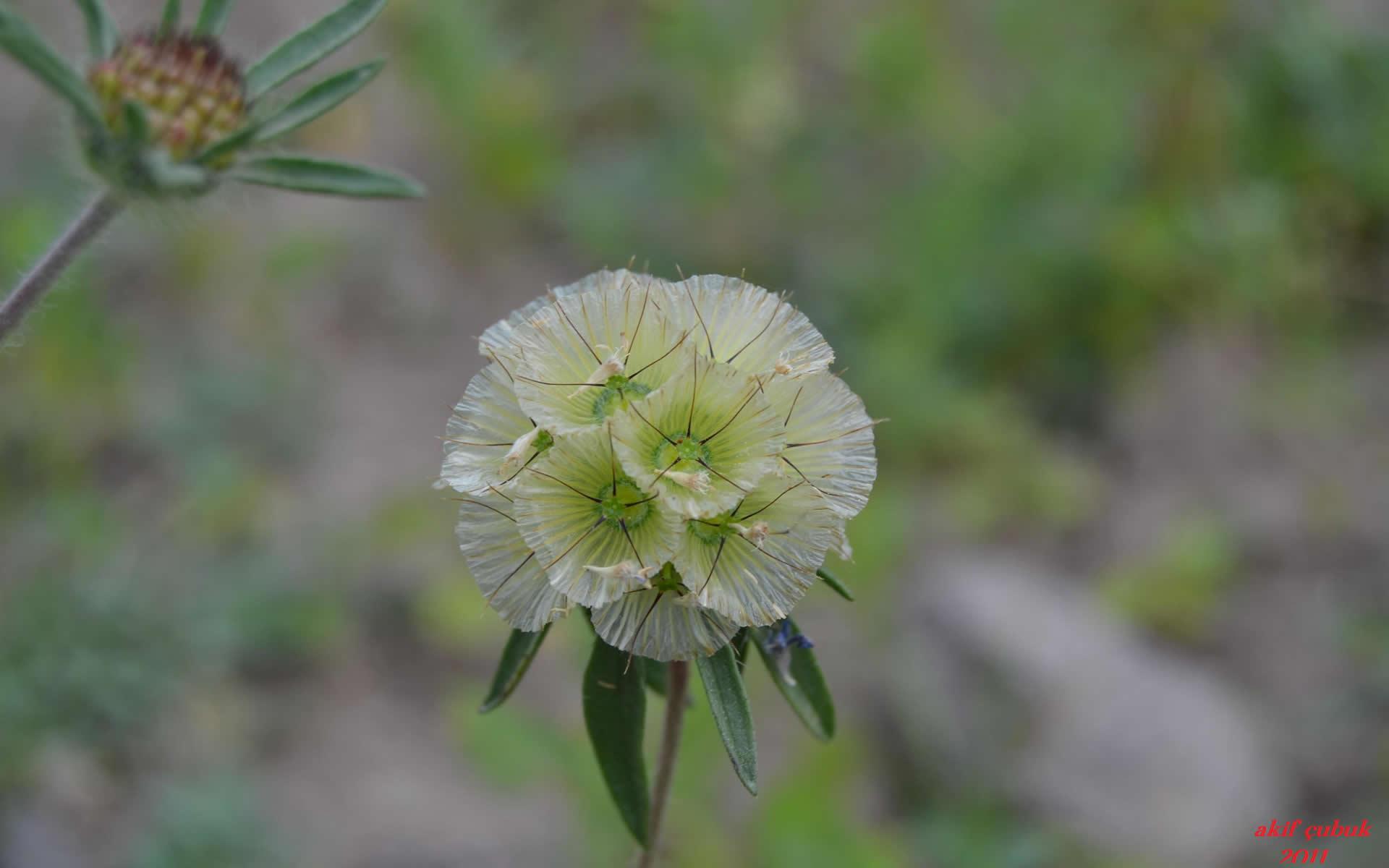 ilginç çiçek