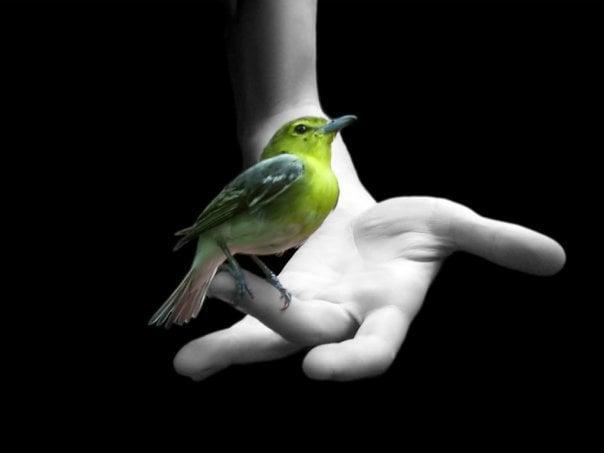 insan ve kuş