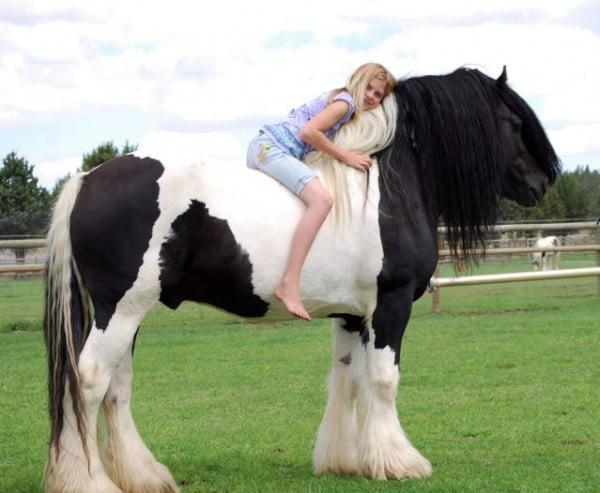 insanlar ve atlar