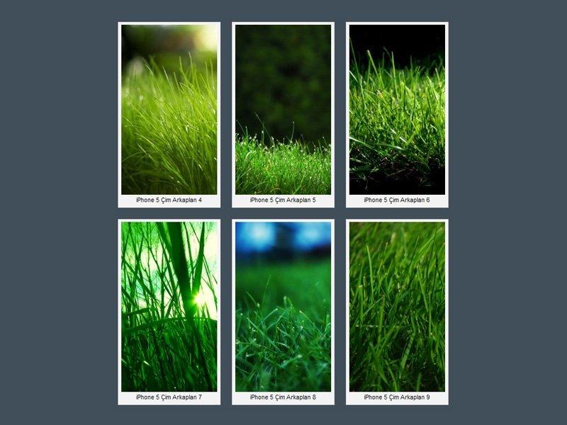 iPhone 5 Yeşil Çim Wallpaper