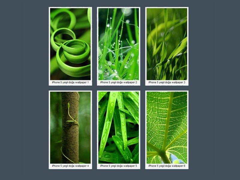 iPhone 5 Yeşil Doğa Wallpaper