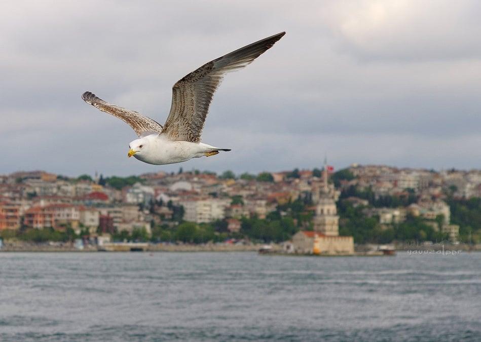 istanbul resimleri – 13