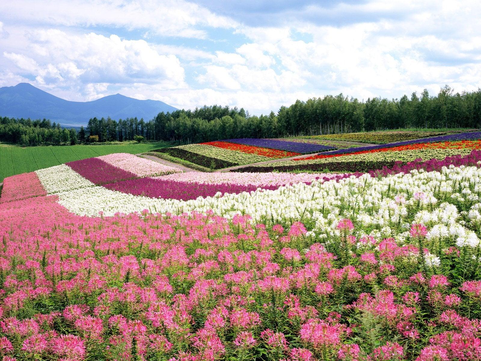 Çiçekli manzaralar-16