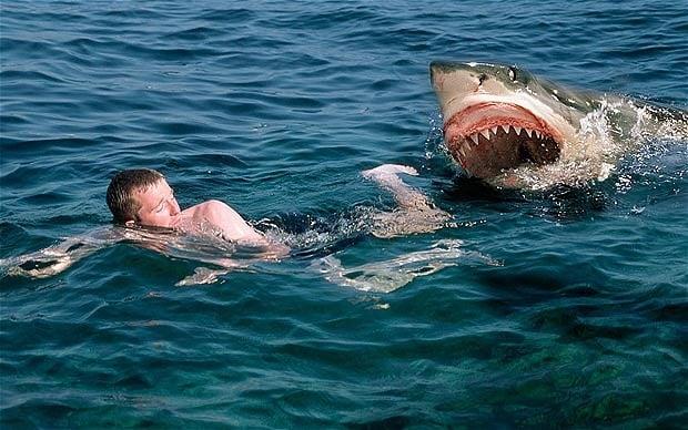Havlasada havlamasada köpekbalığı ısırır