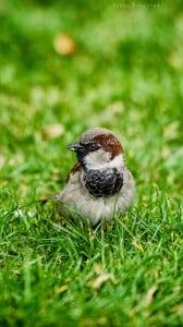 küçük kuş 1080x1920