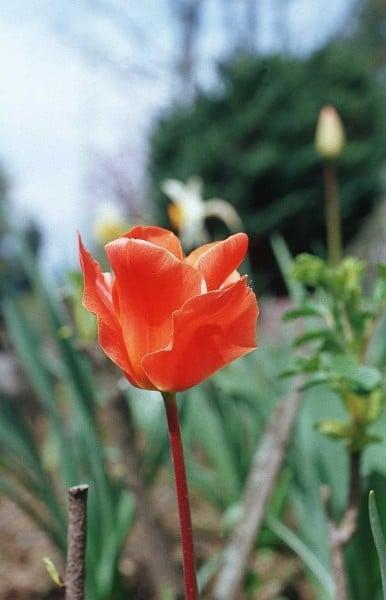 kırmızı çiçek fotoğrafı