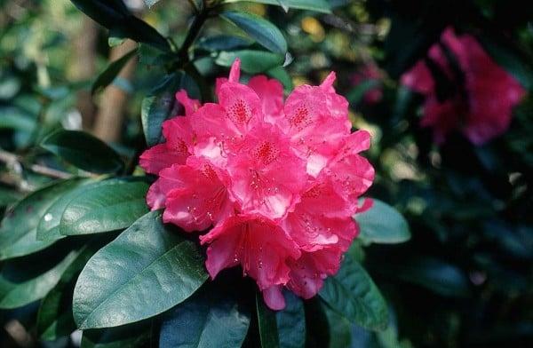 kırmızı çiçek görüntüsü