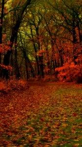 kırmızı orman 1080x1920