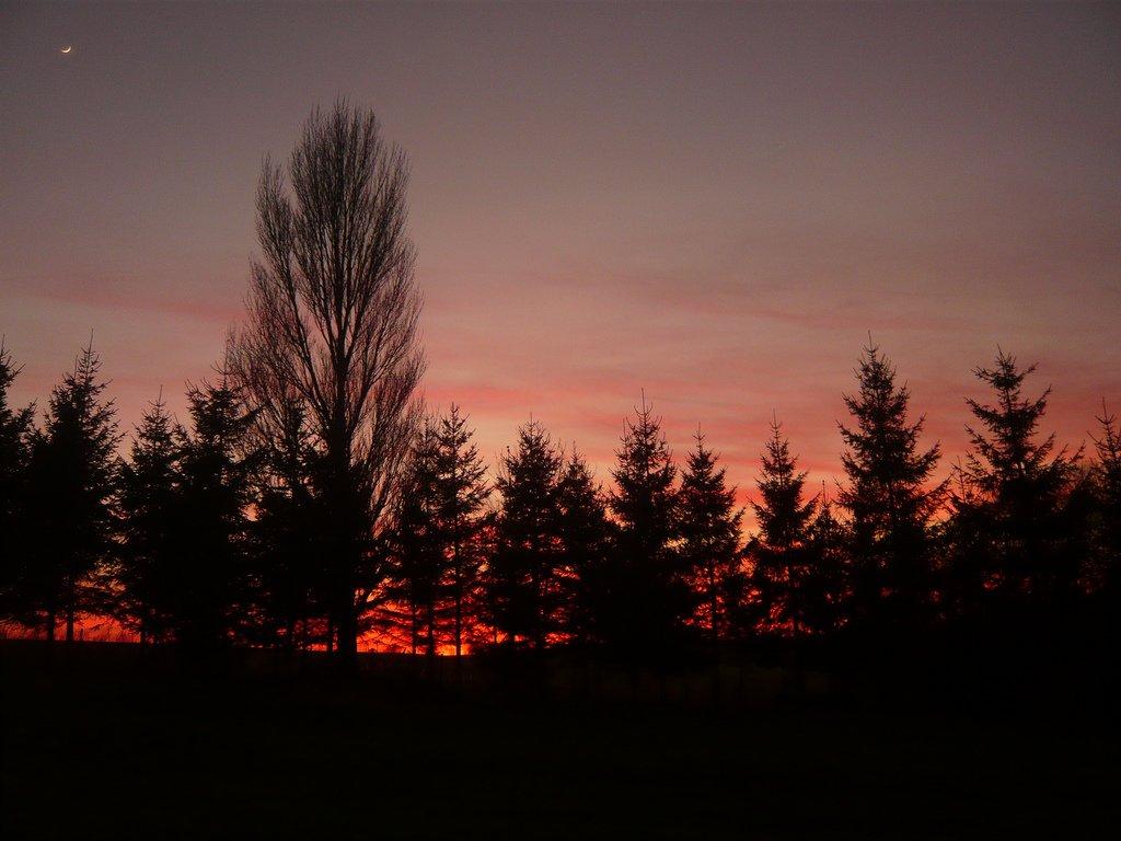 kızıl gökyüzü ve ağaçlar