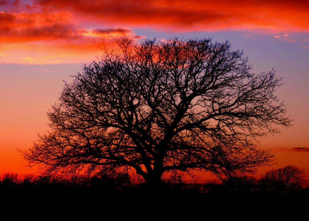 kızıl güneş ve ağaç