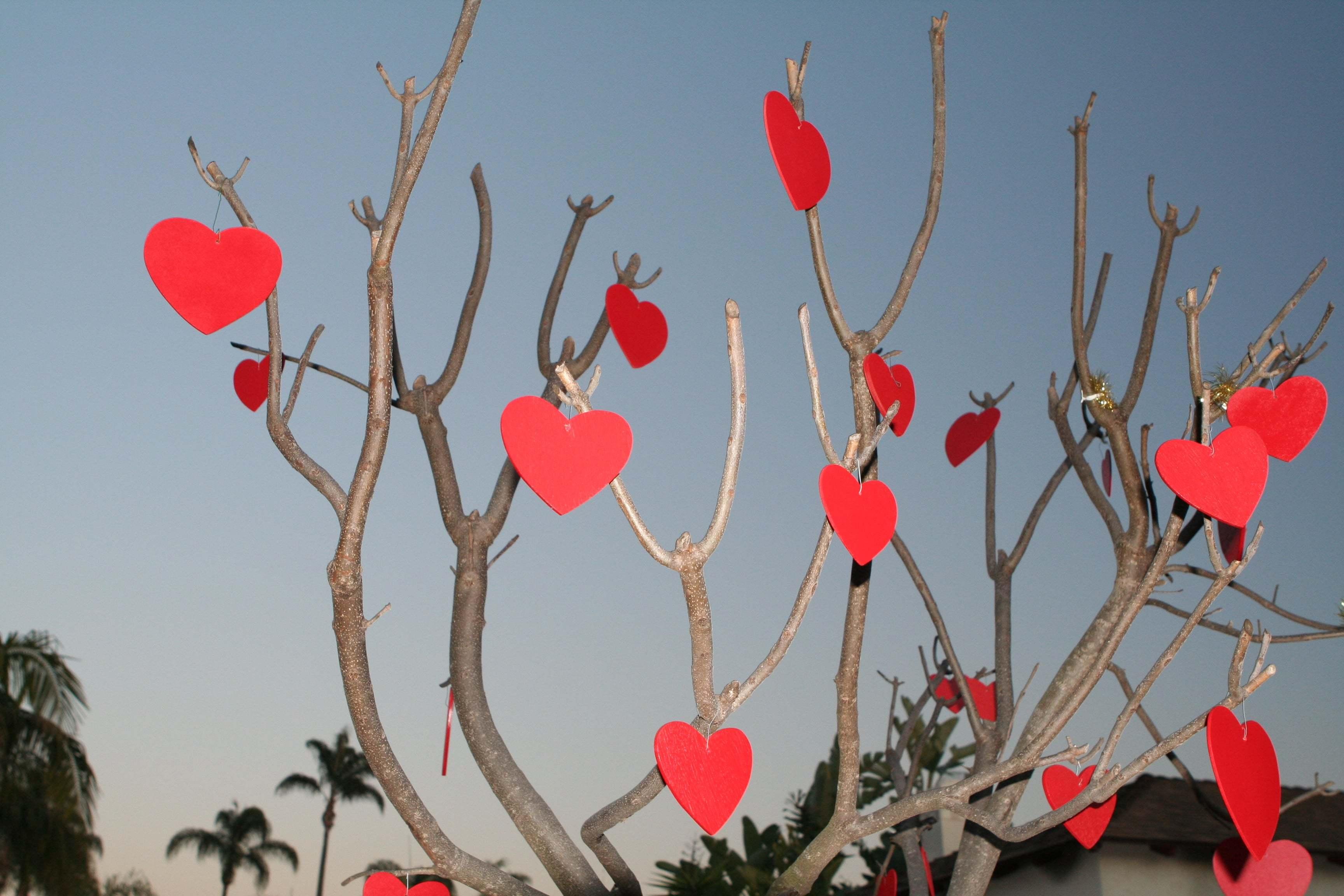 Kalpli duvar kağıtları-42