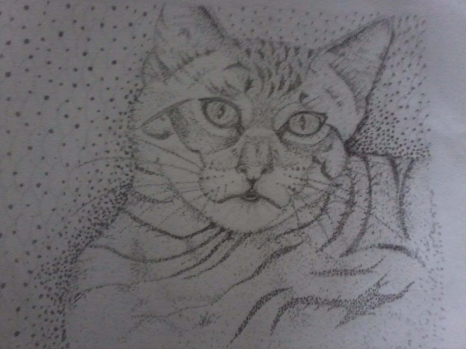 karakalem kedi