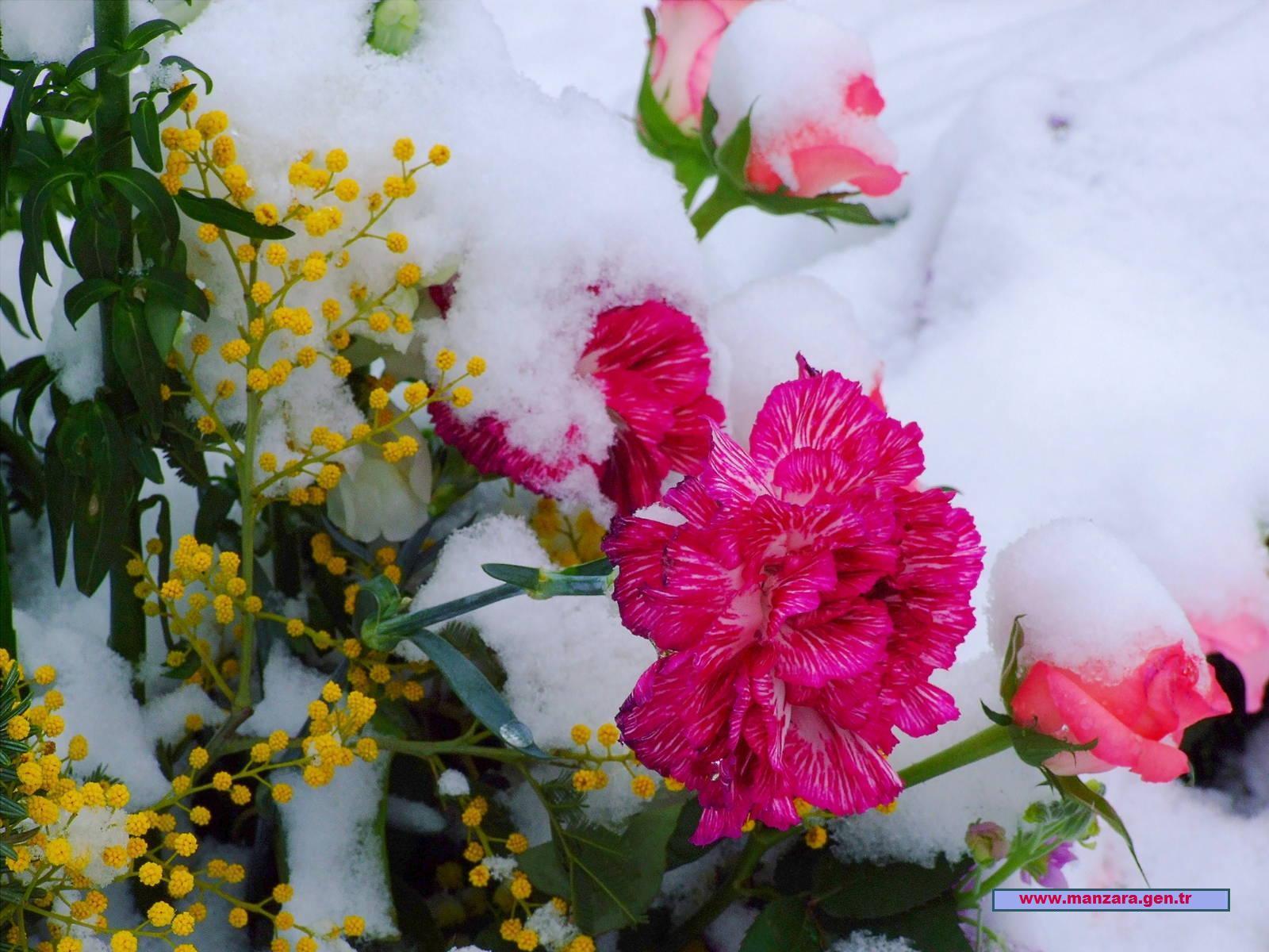 Karlı çiçekler-2