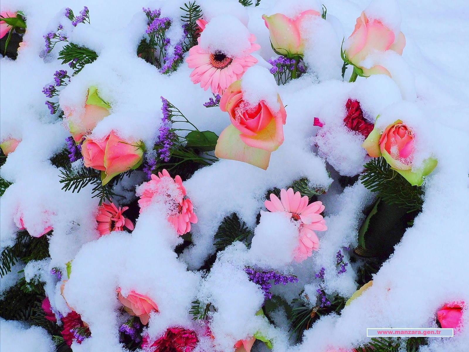 Karlı çiçekler-3