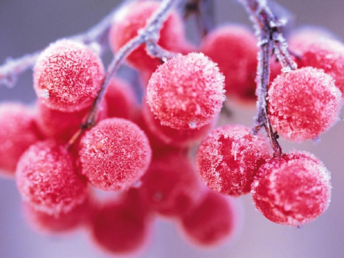 Karlı meyveler-1