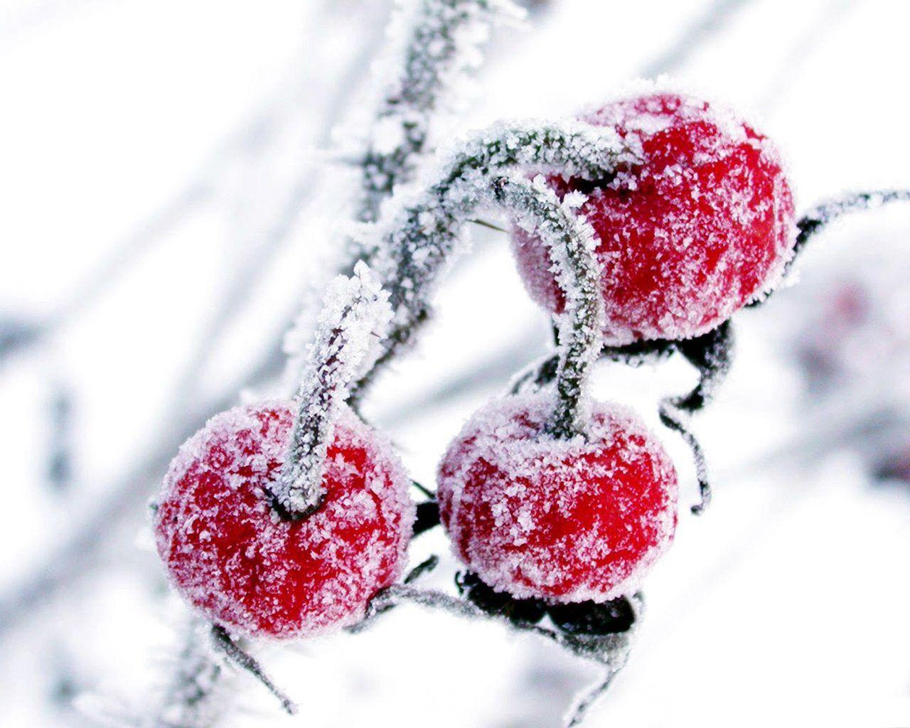 Karlı meyveler-3
