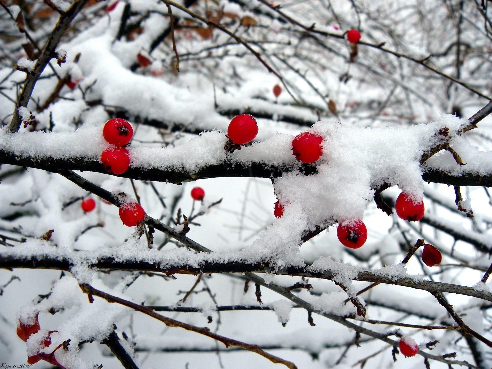 Karlı meyveler-4