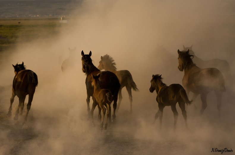 kayseri atlar
