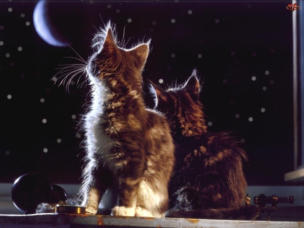 Kedi Temalı Arka Plan