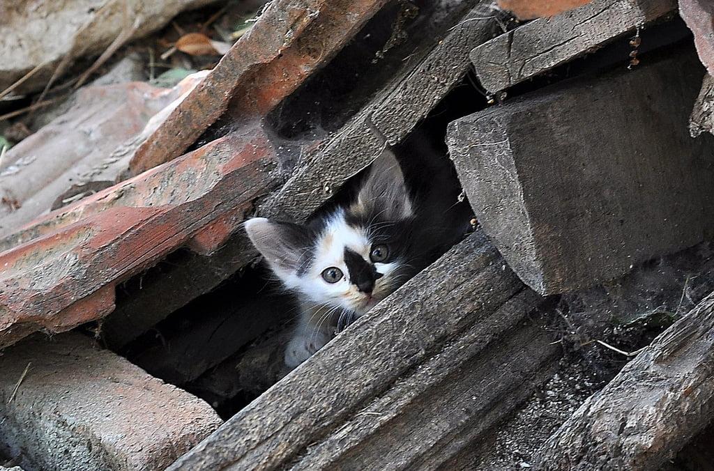 kedi arka planları