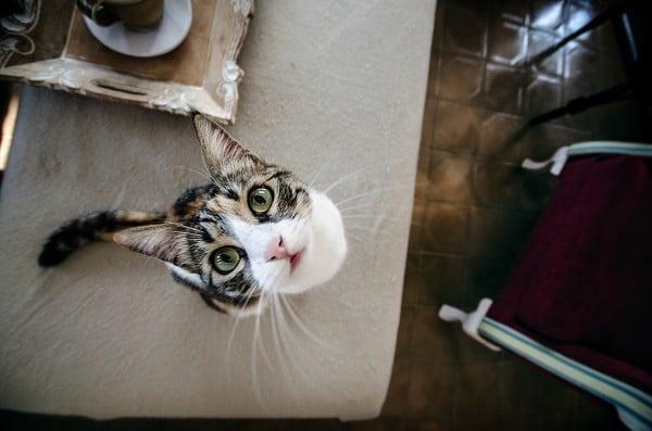 kedi bakışı