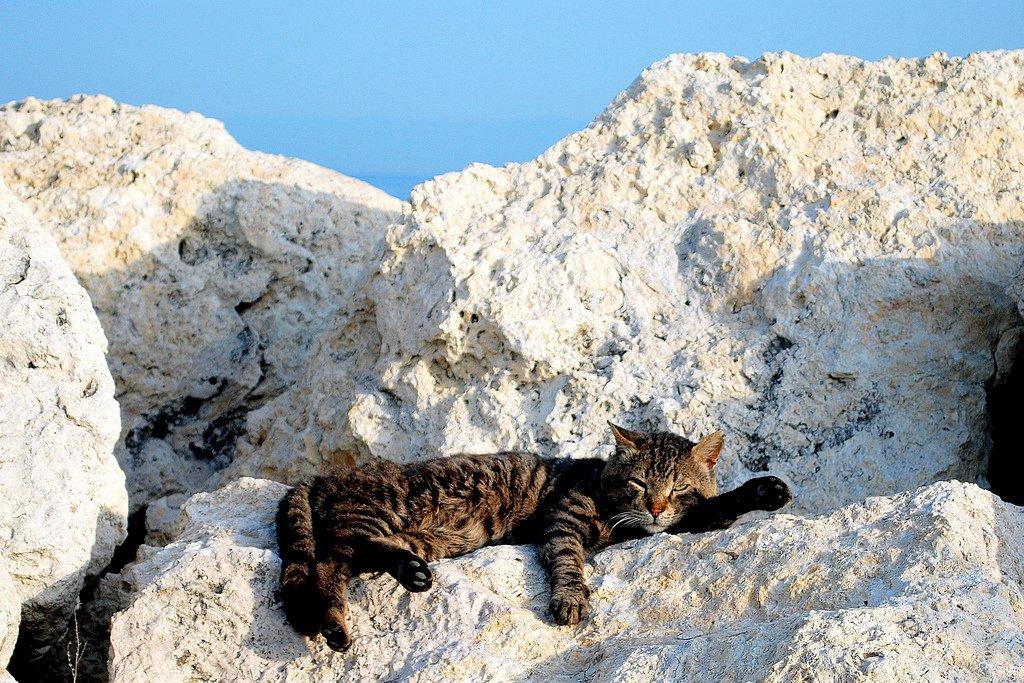 kedi fotoğrafları – 2