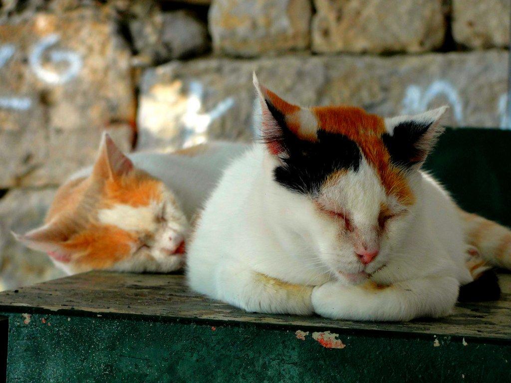 kedi fotoğrafları – 4