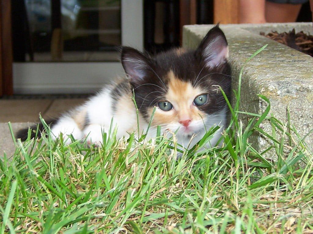 Kedi resimleri-01