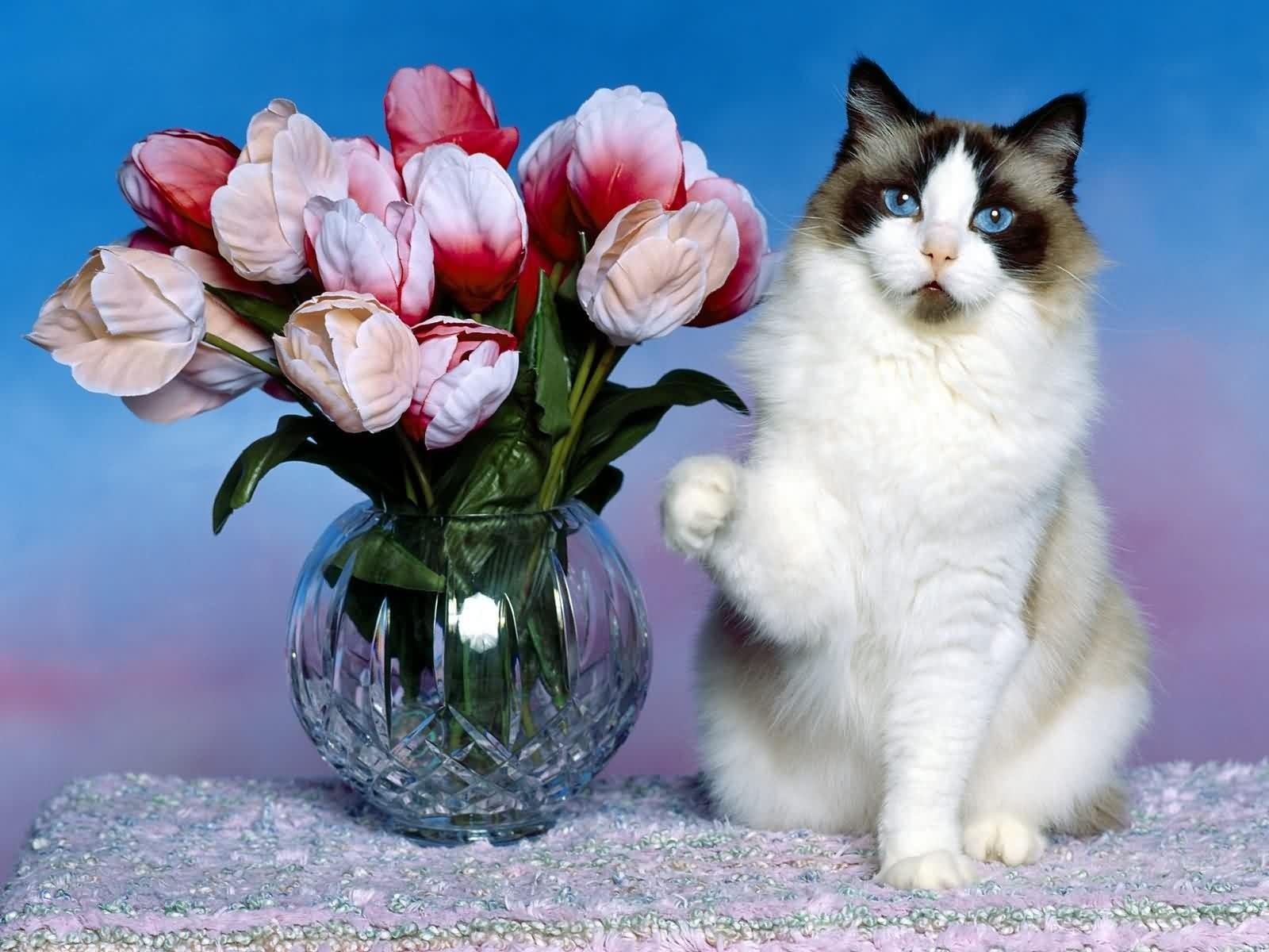 Kedi resimleri-03