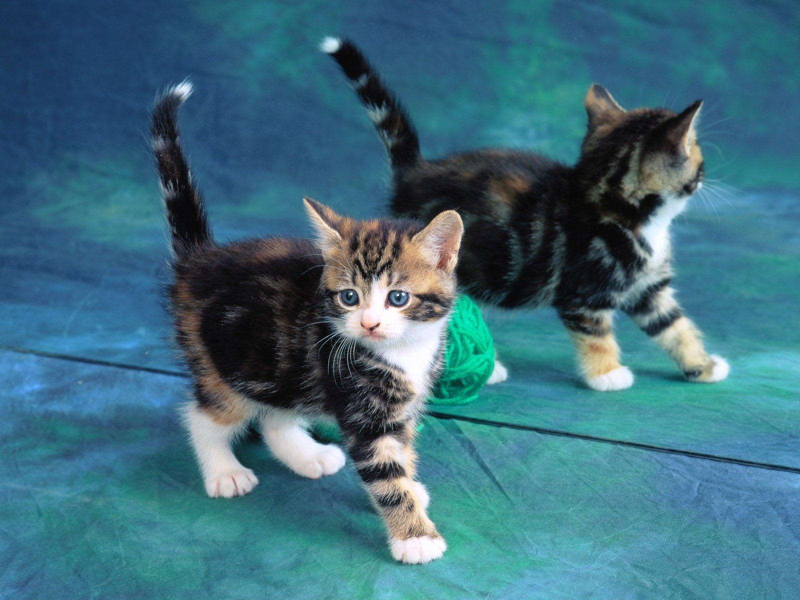Kedi resimleri-04