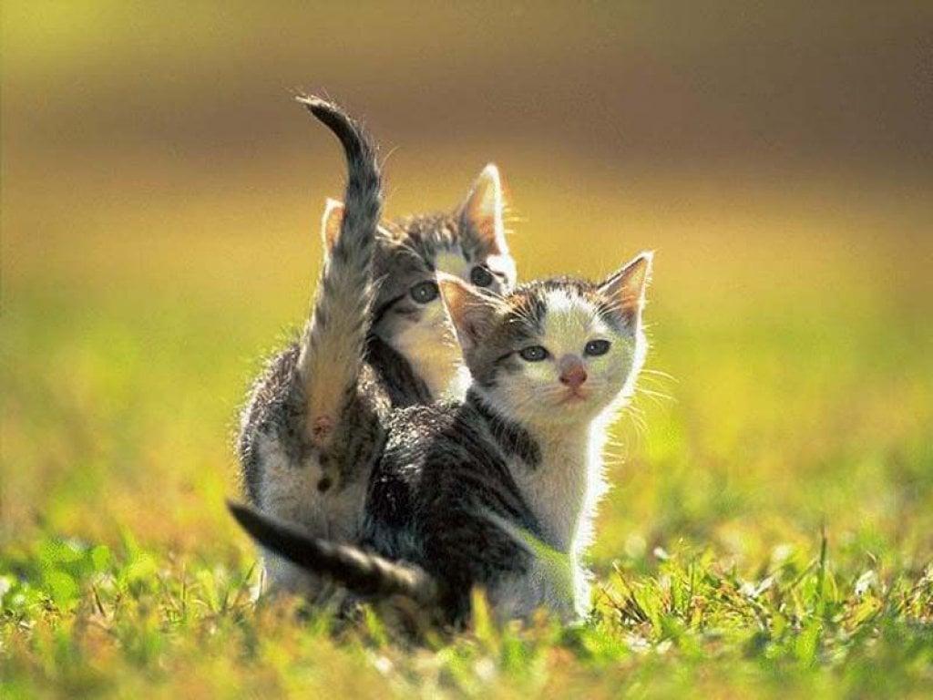Kedi resimleri-08