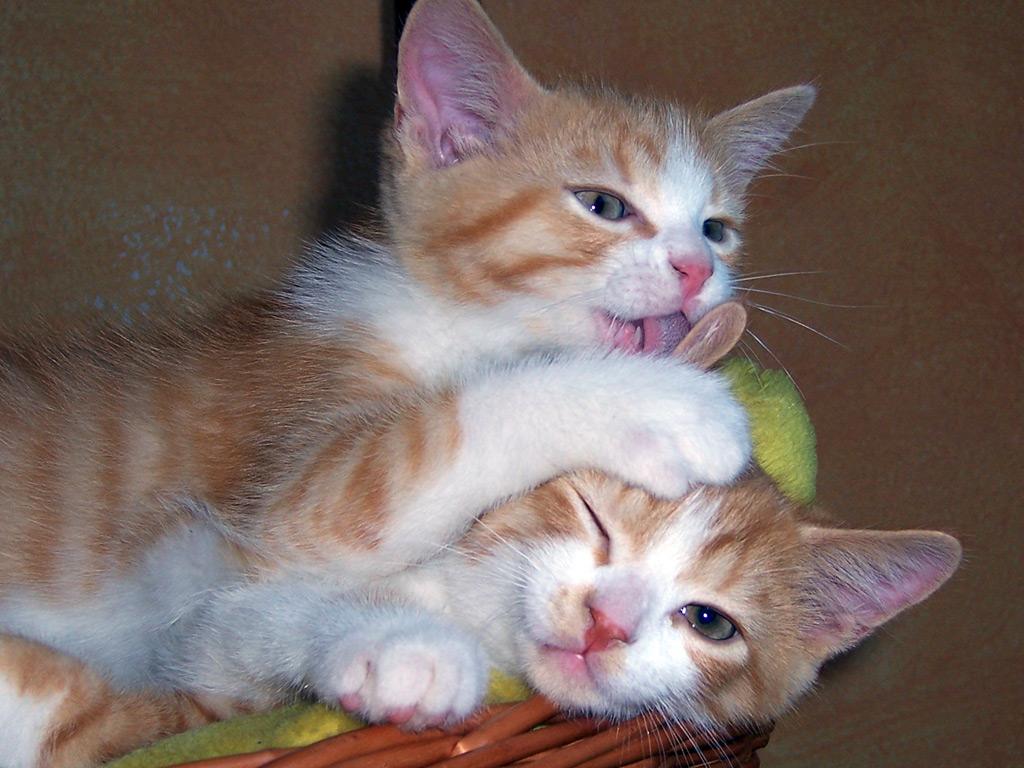 Kedi resimleri-09
