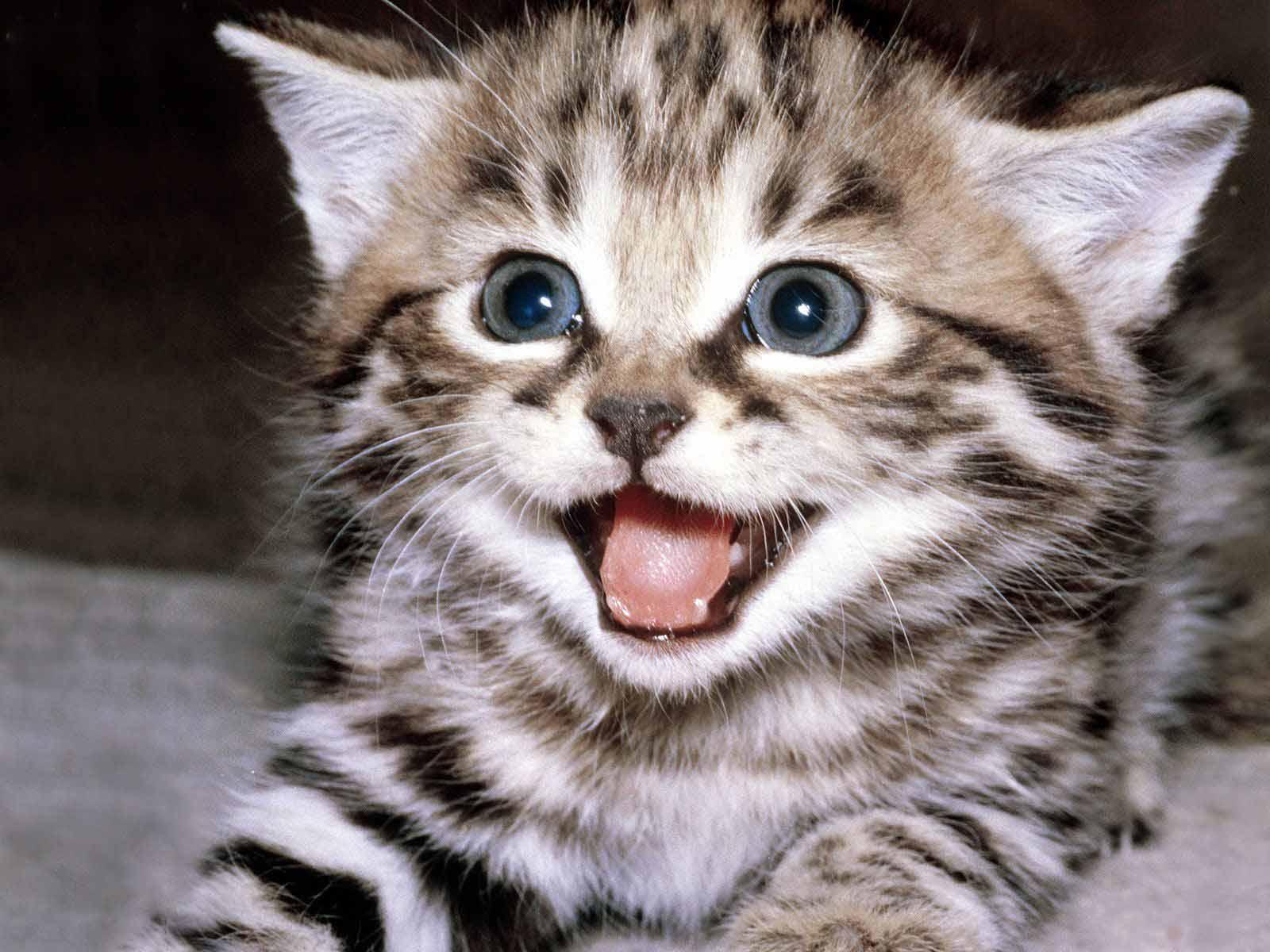 Kedi resimleri-10