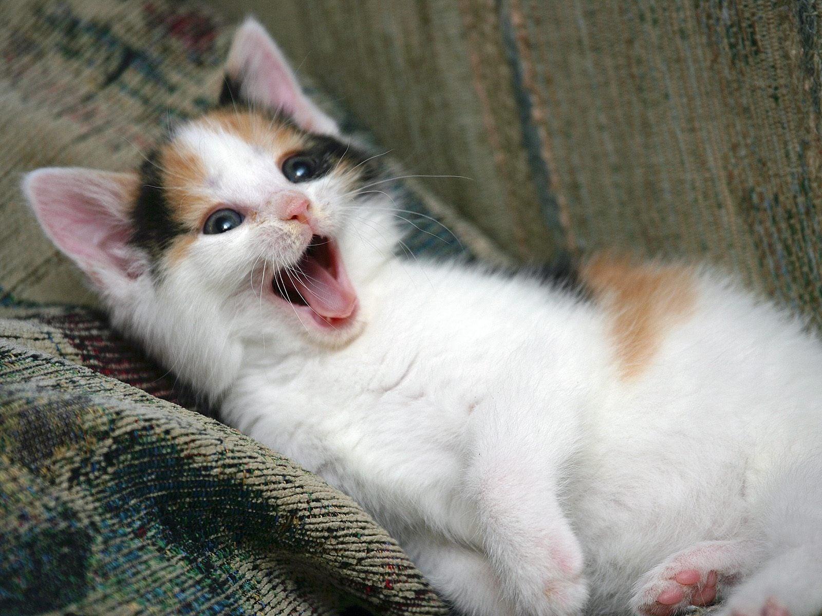Kedi resimleri-11